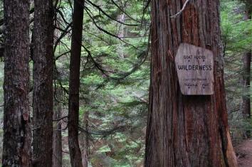 Trail to Packwood Lake