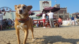 Murphy at the Wonder Bar's Yappy Hour